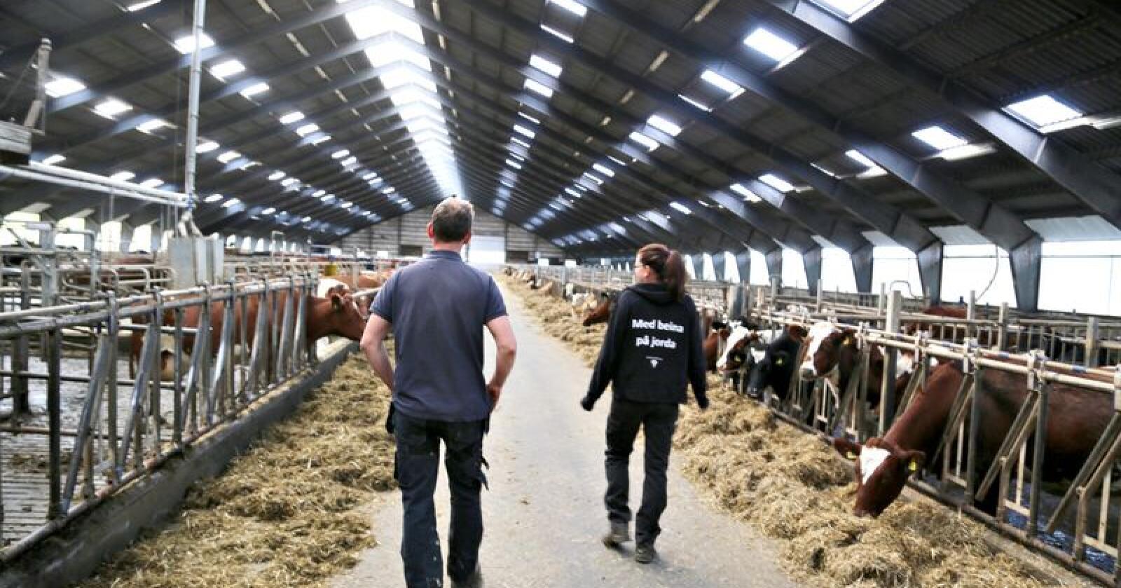 Nedskalering: Det skal utarbeides et opplegg for hvordan nedskaleringen av melkeproduksjonen skal gjennomføres. Det skal være etablert senest 1. oktober i år.  (Foto: Bethi Dirdal Jåtun)
