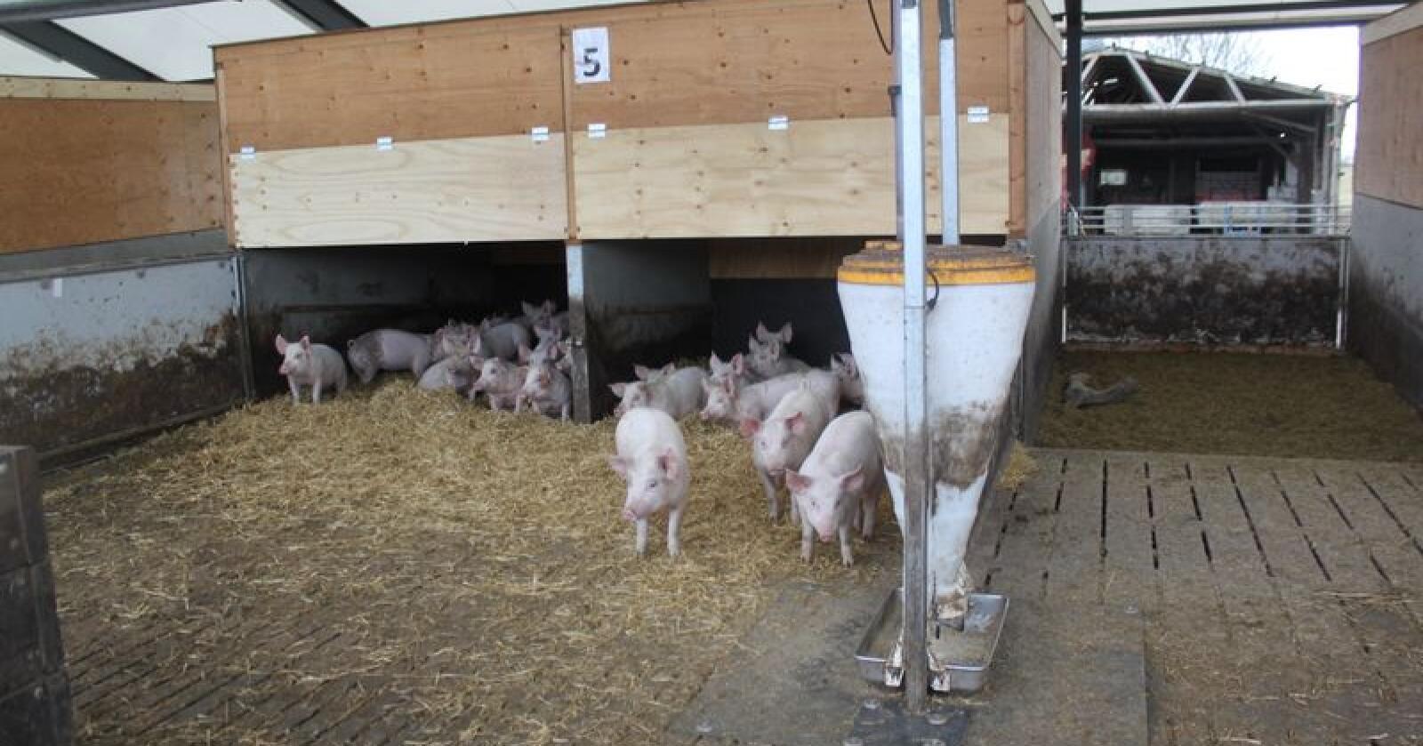 At Danish Crown nå lanserer antibiotikafritt svinekjøtt kan villede forbrukerne til å tro at konvensjonelt svinekjøtt inneholder antibiotika, mener Danske Svineprodusenter. Foto: Camilla Mellemstrand