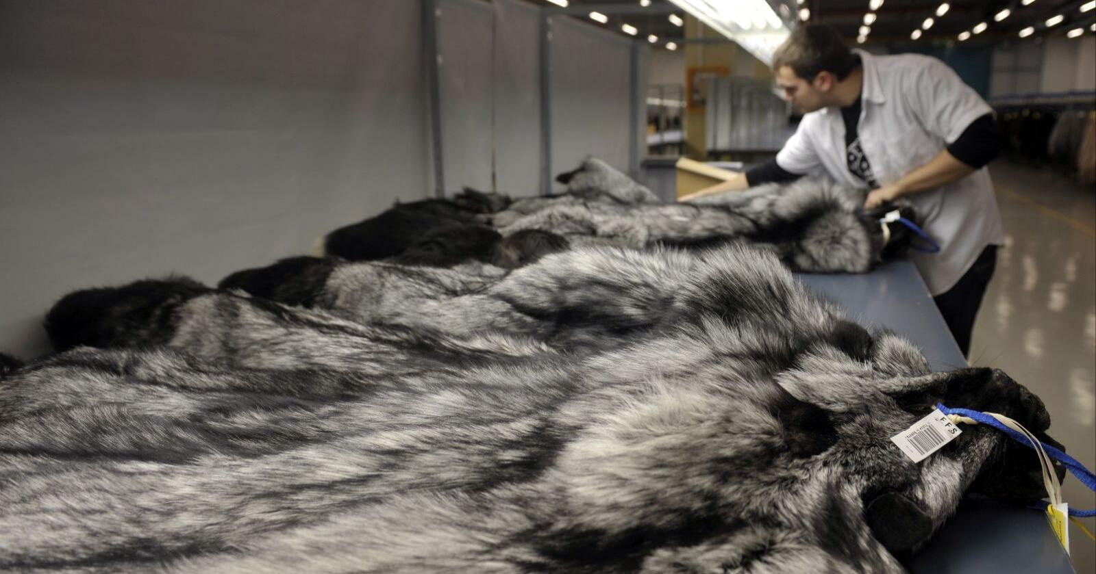 Salget av norsk pels blir ikke som det pleier i år. Foto: NTB Scanpix