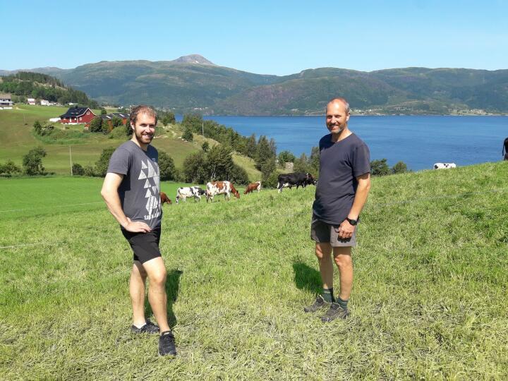 BEITE: Harald Ålen (t.h.) sammen med sin svigersønn Per Aslak Myraunet på beitet som ble sådd 20. mai i fjor. Bildet er tatt 5. juni, fem uker etter såing. Førdefjorden og toppen av Håsteinen ses i bakgrunnen. Foto: Arve Arstein