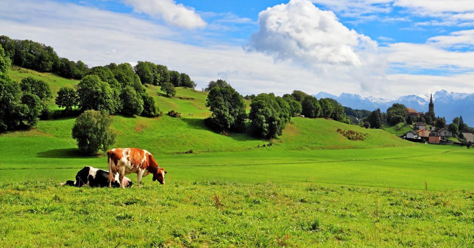Det blir stilt krav til europeiske bønder om bærekraftig produksjon for å få landbruksstøtte. Her fra Provence i Frankrike. Foto: Colourbox