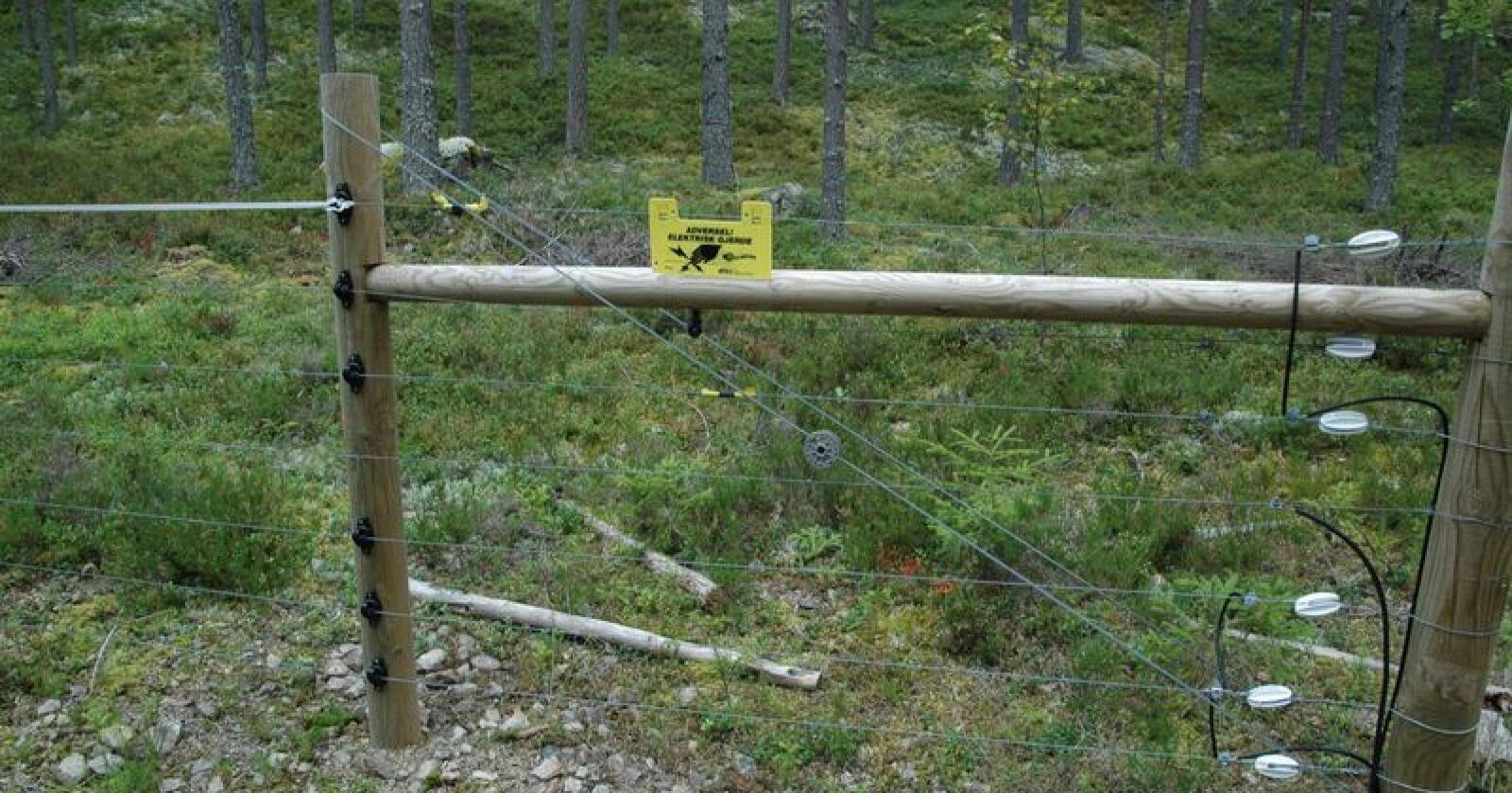 Rovviltavvisende gjerder blir mer og mer aktuelt i de verst utsatte rovdyrområdene, mener Nibioforsker og leder av Norsk viltskadesenter Inger Hansen til Bondebladet. (Arkivfoto)