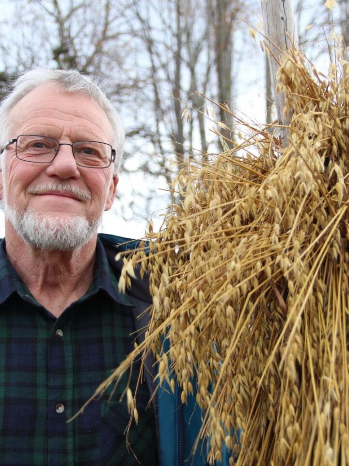 PRISVINNER: Lars Reitan har brukt nesten hele livet sitt til å forske på og foredle fram nye og forbedrede kornsorter. Det har ikke gått upåaktet hen, og i år vant han Plantearvprisen for arbeidet sitt.
