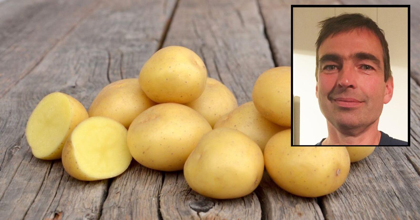 Produktsjef for settepotet i Strand Unikorn, Hans Arne Krogsti, har tro på at potetsorten Anouk kan utfordre franske Amandine og Anoe. Utfordringen er å få produsert nok av den. Foto: Strand Unikorn