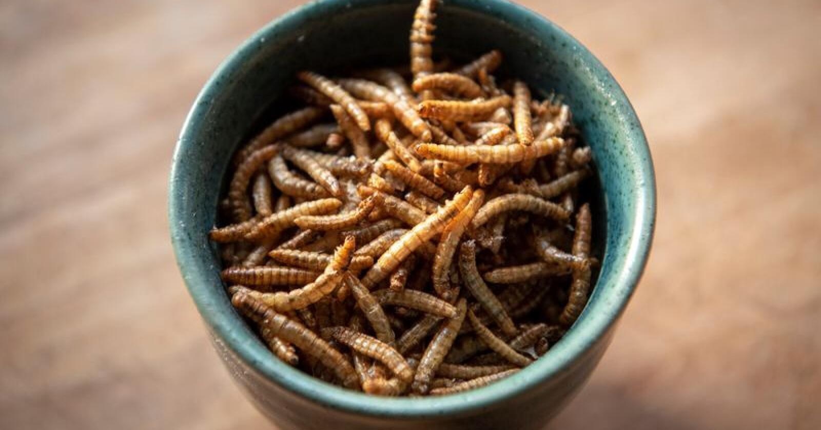 Bærekraftig: Larveriet i Voss driver larveoppdrett til bruk i menneskemat og dyrefôr. Nå vil de selge larveavføringen som gjødsel. Foto: Anette Skutevik.
