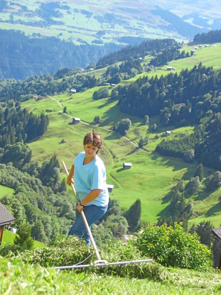 Den gode gamle rakeriva – et nødvendig redskap i et moderne WTO-tilpasset sveitsisk landbruk. Alle foto: Ole G. Hertzenberg