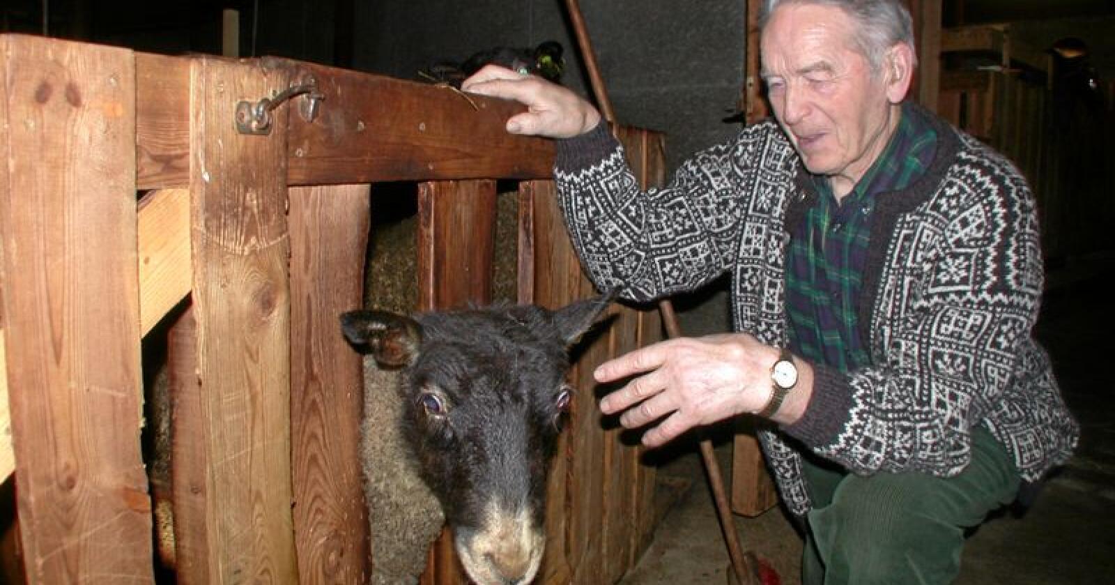 Helge Bergo gjorde et kraftig inntrykk på flere generasjoner av norske bondetillitsvalgte. Her er han fotografert i eget fjøs. Foto: Ragnhild Olsen