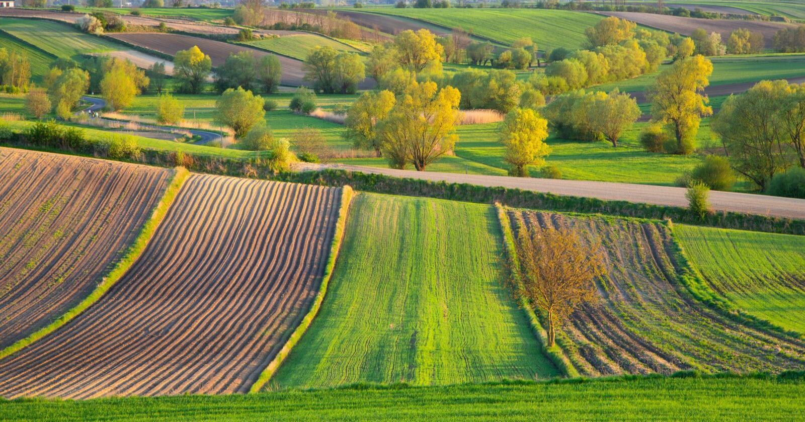 EU-landene går mot ny landbrukspolitikk, men møter kritikk fra flere hold. Her fra Polen. Foto: Sergey Dzyuba/Mostphotos