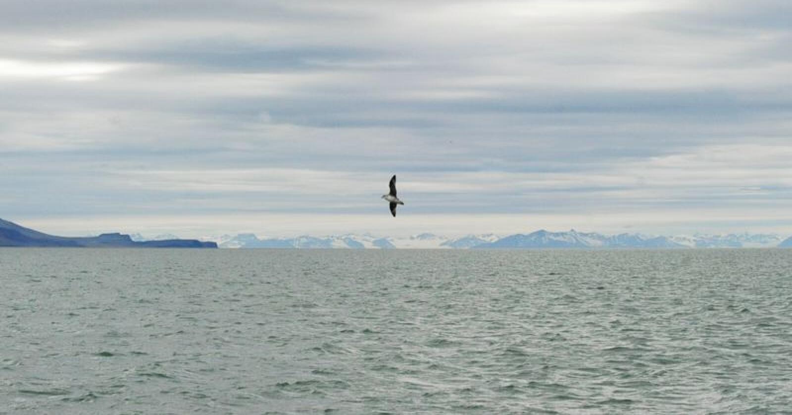 Senteret skal gi et mer helhetlig bilde av hvilke utfordringer og muligheter som venter Nordområdene fremover. Foto: Siri Juell Rasmussen