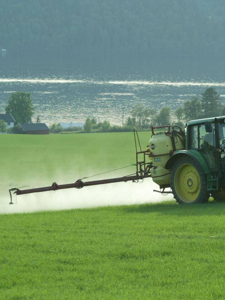 Fra høy til lav: Da lavdosemidlene kom på 80-tallet, fikk vi ugrasmidler som var enkle å håndtere, hadde lav giftighet og dermed lave avgifter, og som fungerte veldig godt mot tofrøbladet ugras i korn. Men de er også relativt lette for ugras å utvikle resistens mot. Arkivfoto: Norsk Landbruk