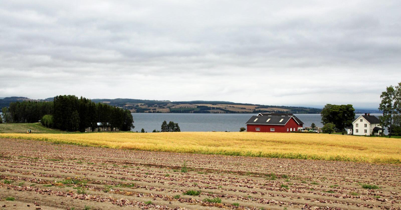 Det er mye grønnsaksproduksjon i Østre Toten. Bildet er fra tørkesommeren i 2018. Foto: Lars Bilit Hagen