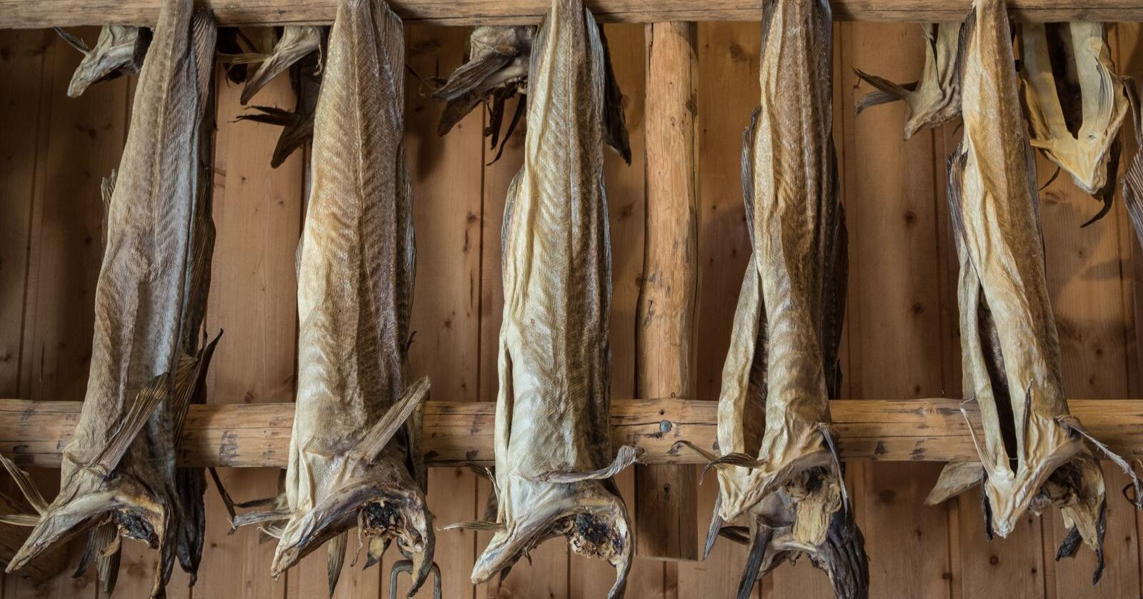 Milliardverdier: Få er klar over at rundt 7 av de rundt 17 milliardene som utgjør verdien av den totale hvitfiskeksporten hvert år, stammer fra tørrfisk, klippfisk og saltfisk, skriver innsenderen.