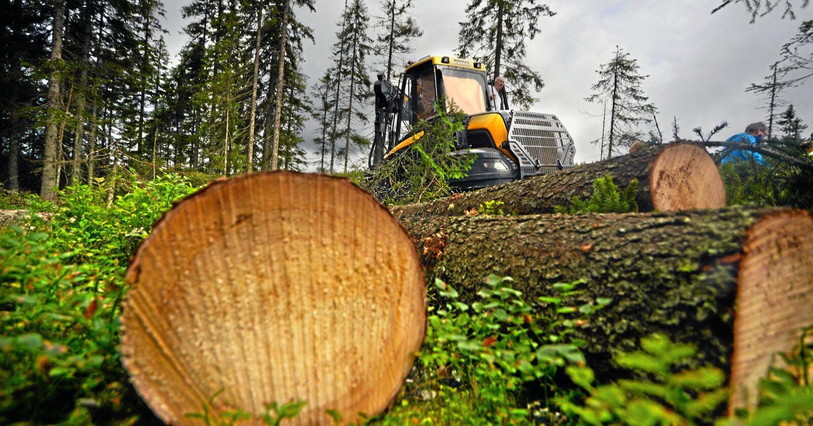 Skog: Det er skapt inntrykk av at EU ville forby flatehogst. Foto: Siri Juell Rasmussen