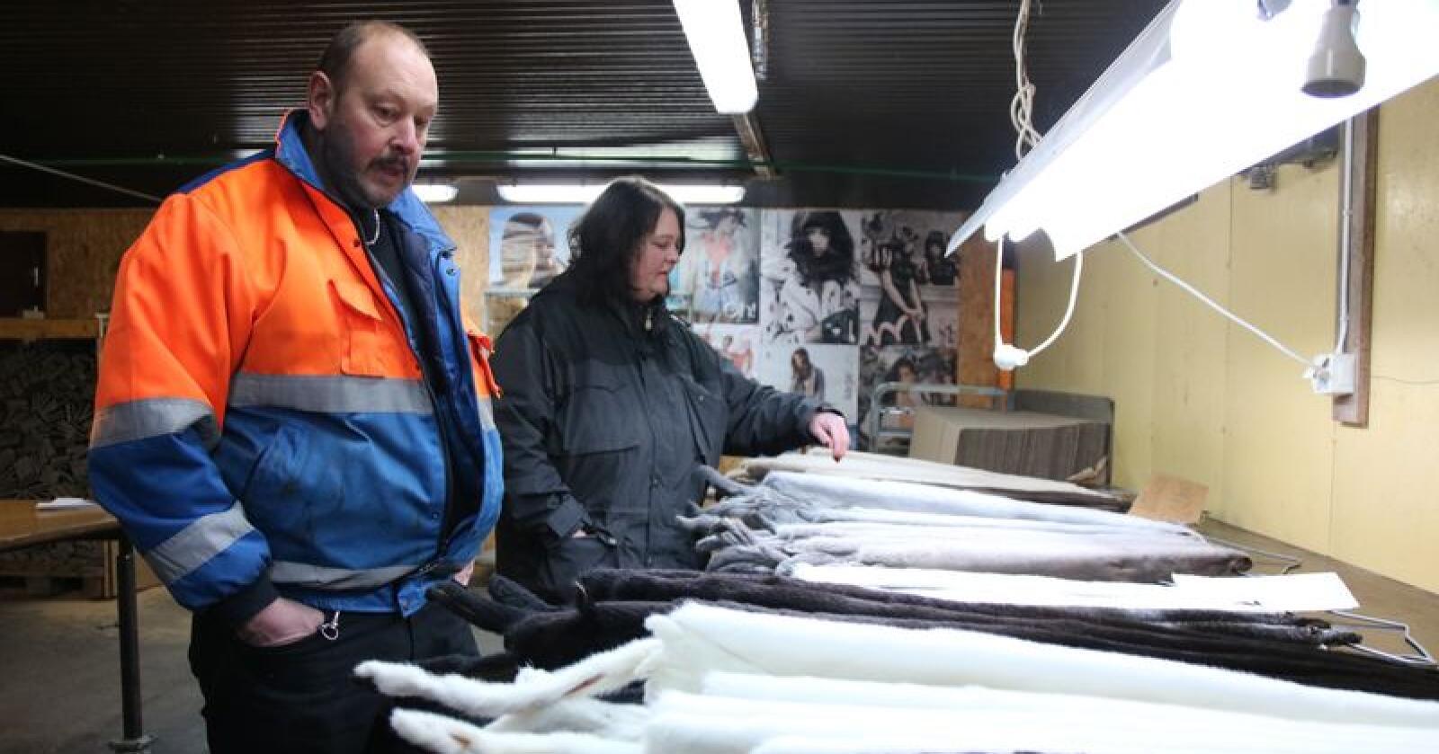 Mari og Ole Jonny Indergård på Gjøvik har vært minkoppdrettere siden 2007. Nå er de i ferd med å miste troen på at de vil ha en plass i norsk landbruk etter 2025. Foto: Camilla Mellemstrand