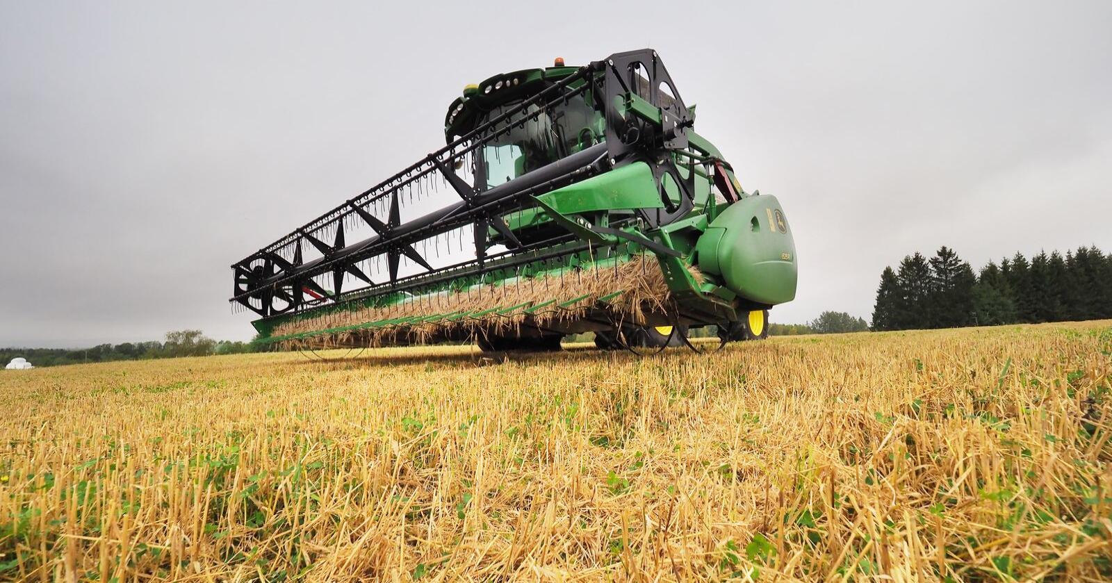 Fylkesmannen i Trøndelag reknar at om lag 10 prosent av kornet er hausta inn i midten av september. Foto: Siri Juell Rasmussen