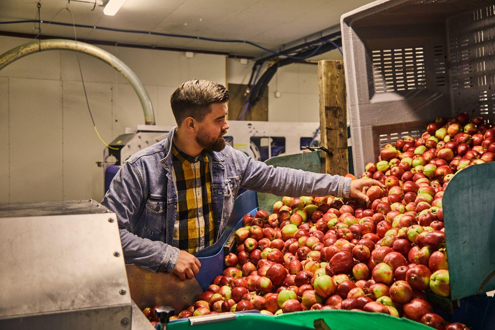 Che ci crediate o no: la fantastica crescita dei siti norvegesi è diventata una realtà perché alcuni frutticoltori credono nelle opportunità di creare qualcosa di unico dai propri frutti e dalle proprie tradizioni, scrive Chronicle.  Foto: Einstein Hara