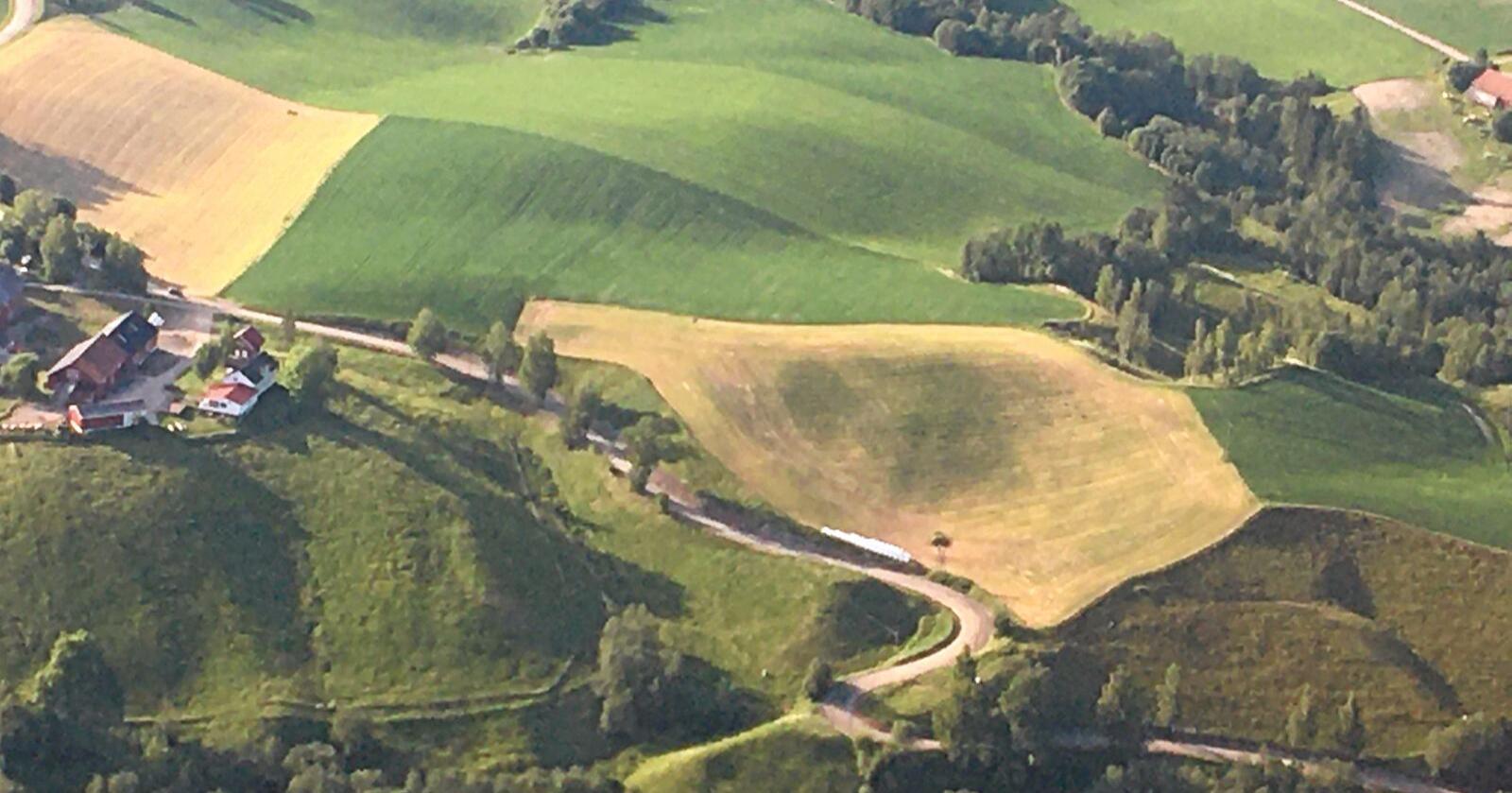 Nyslått: Siden 2004 er en halv million dekar kornjord lagt om til gras, stikk i strid med nasjonale mål. Foto: Hans Bårdsgård