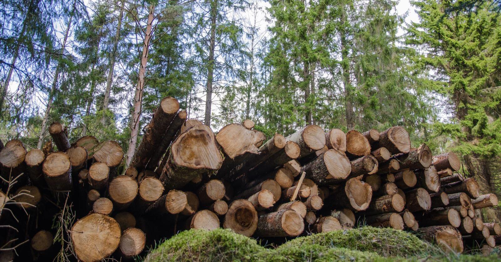 Ikke bærekraftig: Norsk skogbruk er ikke bærekraftig før næringsnøytrale, fagbiologiske registreringer er foretatt i all skog som planlegges hogd, skriver innsenderen. Foto: Mostphotos