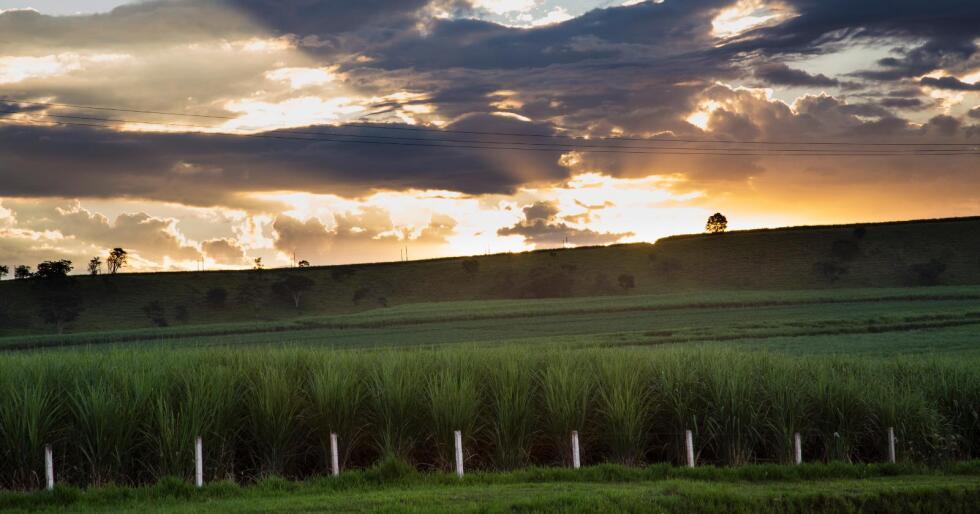 Mer frihandel: Brasil, Argentina, Paraguay og Uruguay står bak Mercosur. De fire landene er storeksportører av mat. Nå starter første forhandlingsrunde mellom Efta og Mercosur, og målet er en frihandelsavtale. (Arkivfoto Nationen)