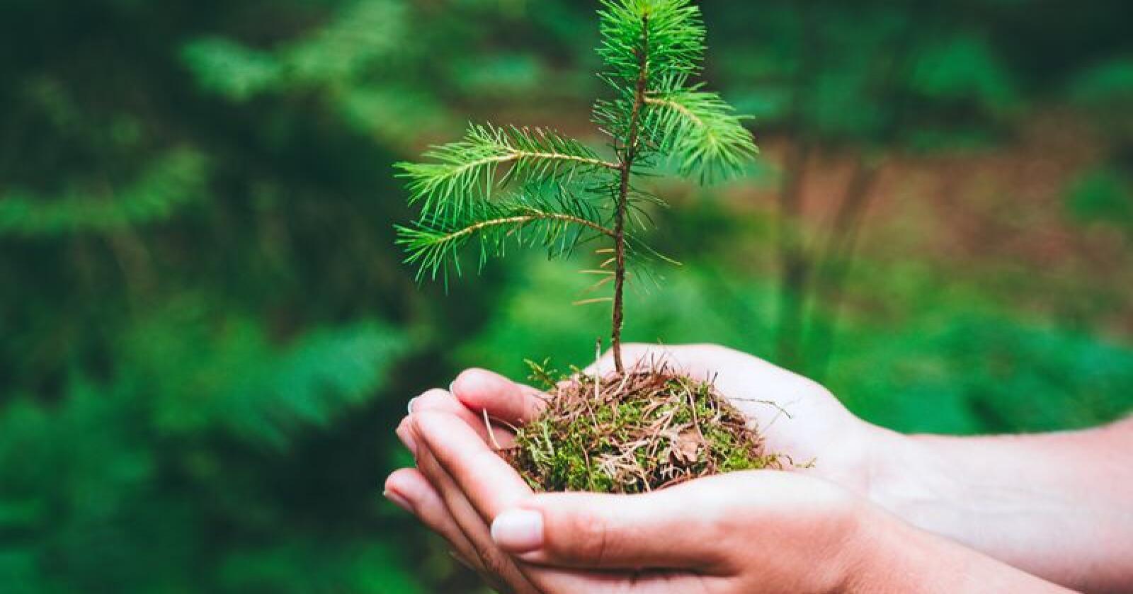 Skogen har et enormt potensial for å bli enda viktigere for norsk verdiskaping og arbeidsplasser, skriver sjefredaktør Irene Halvorsen i Nationen. Foto: Mostphotos