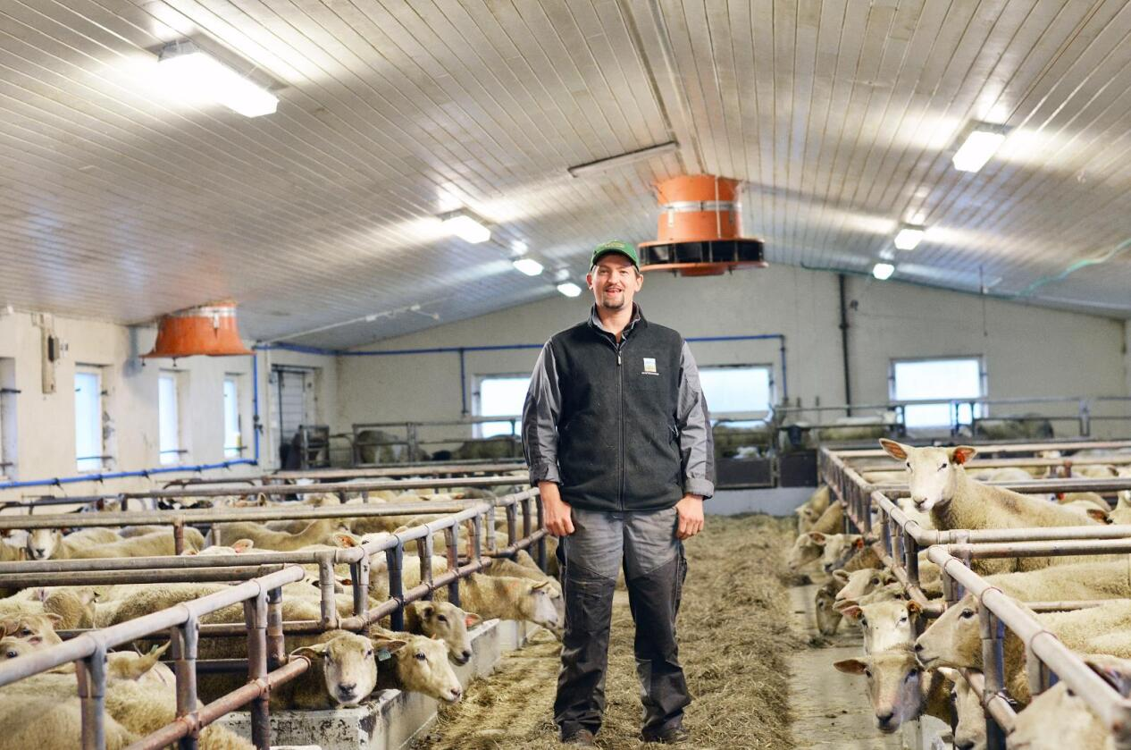 Færre dyr: Anders Schanche Rettedal i Rogaland har dei siste åra redusert med nesten 100 vinterfôra sau. Foto: Benjamin Hernes Vogl