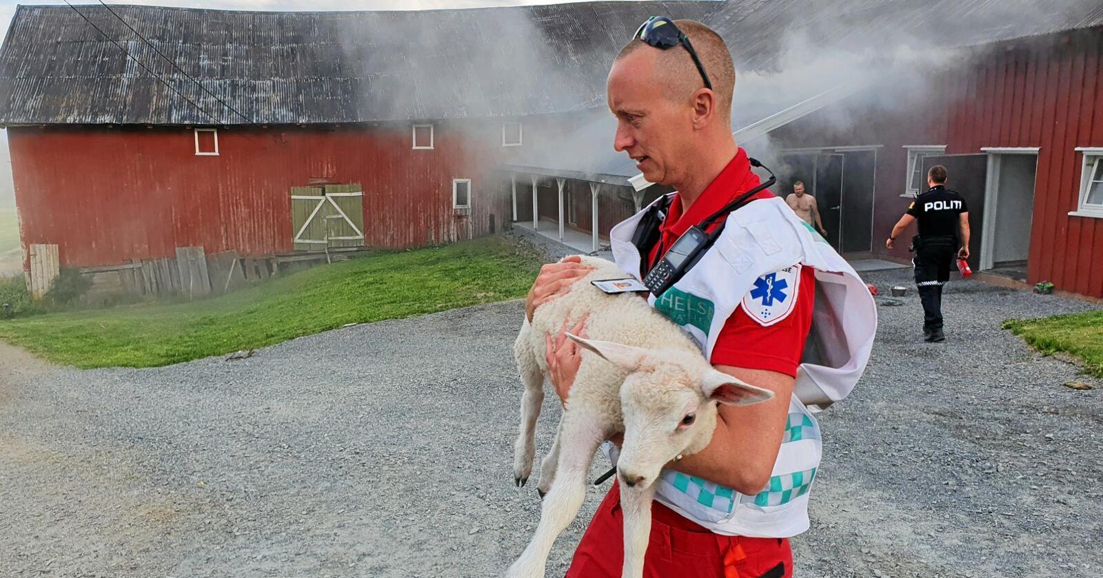Ambulansearbeider Even Nordli redder et lam fra gården i Snertingdalen. Foto: Politiet