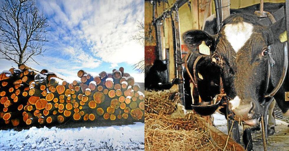 Utdanning innen jordbruk, skogbruk og dyrehold er blitt mer populær for hvert år som har gått. Foto: Siri Juell Rasmussen/Mariann Tvete