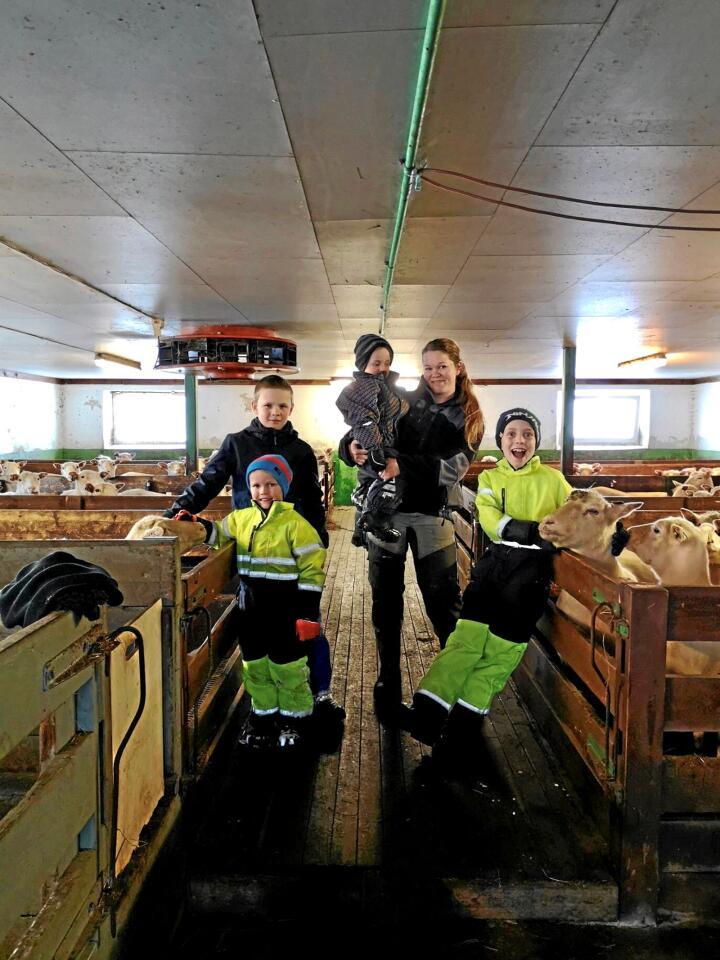 Teodor (12), Alfred (5), Ludvik (3), Ingunn og Ottar (10) i sauefjøset på garden Kamsletta i Rindal. Foto: Privat