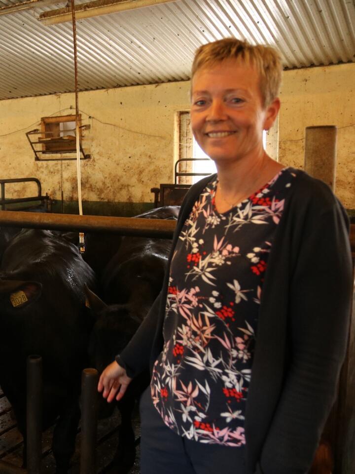KVIGEOPPFÔRING: I det gamle melkefjøset til Jan og Anne Skisland har melkekua blitt kastet ut til fordel for oppfôring av kviger.