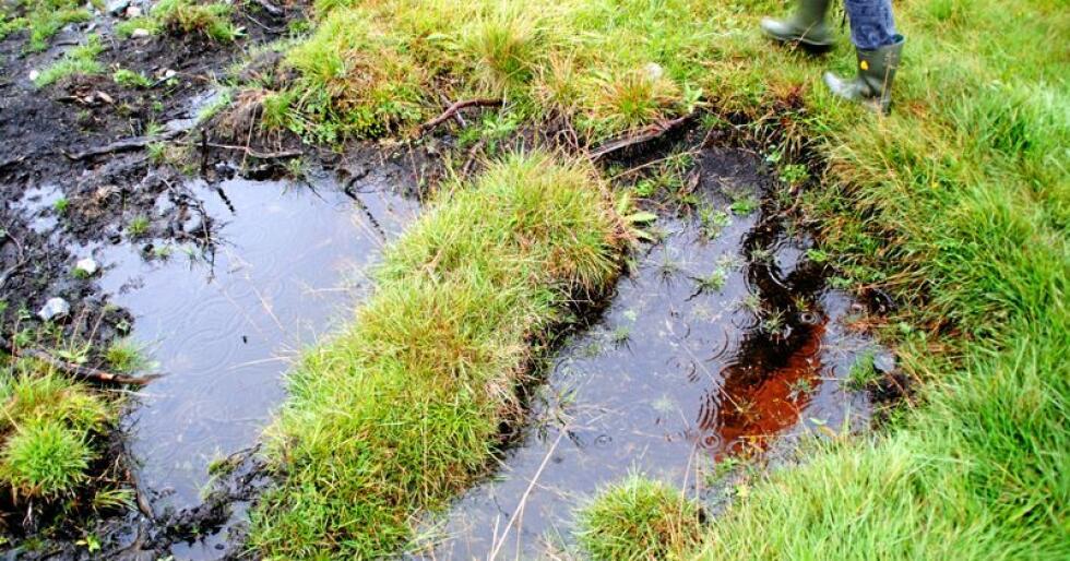 Myrforbudet er vitkig for blant annet for naturmangfoldet og opptak av karbon, mener Sabima. Foto: Lars Bilit Hagen