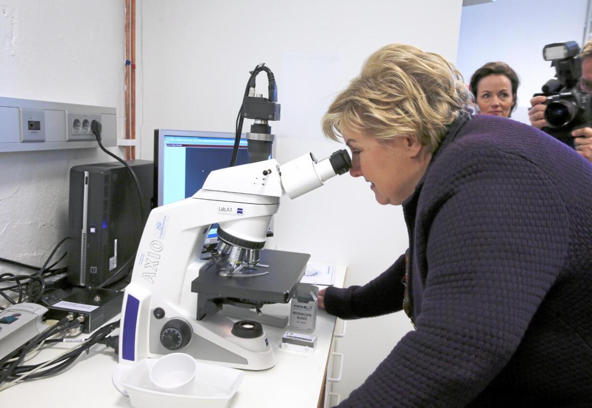 Tok en titt: Statsminister Erna Solberg (H) ble invitert til Hamar for å se nærmere på virksomheten til bioteknologifirmaet Cryogenetics AS. Foto: Vidar Ruud / NTB Scanpix