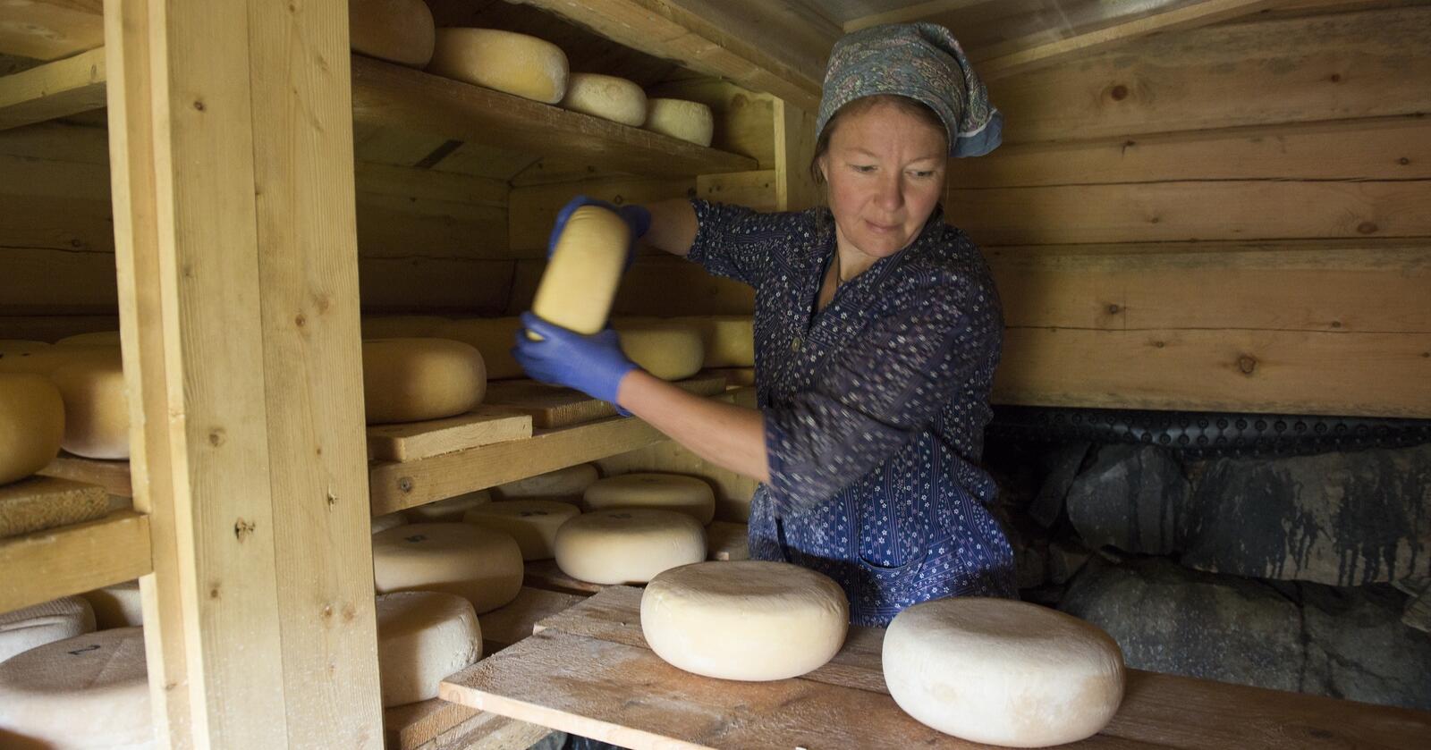 – Uforståelig. – Forbudet mot salg av rå melk er uforståelig. Det ser ut som departementet ikke tar innover seg at dagens forbrukere er opplyste og i stadig større grad etterspør rå melk, sier Ragnhild Nordbø, fagrådgiver i Norsk Gardsost. Her på Jelsetra i Rennebu i Trøndelag – der det også er osteproduksjon. Foto: Aina Bye