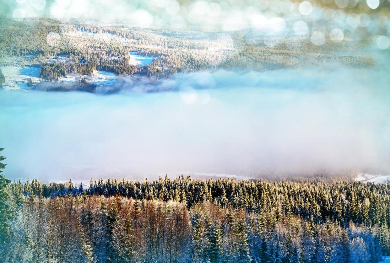 Biologisk mangfold: Halvparten av de truete artene er knyttet til skog, skriver kronikkforfatteren. Foto: Galyna Andrushko / Mostphotos
