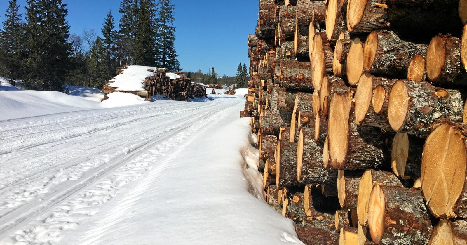 Norsk tresukker kan erstatte 70.000 tonn importert sukker. Illustrasjonsfoto: Hans Bårdsgård