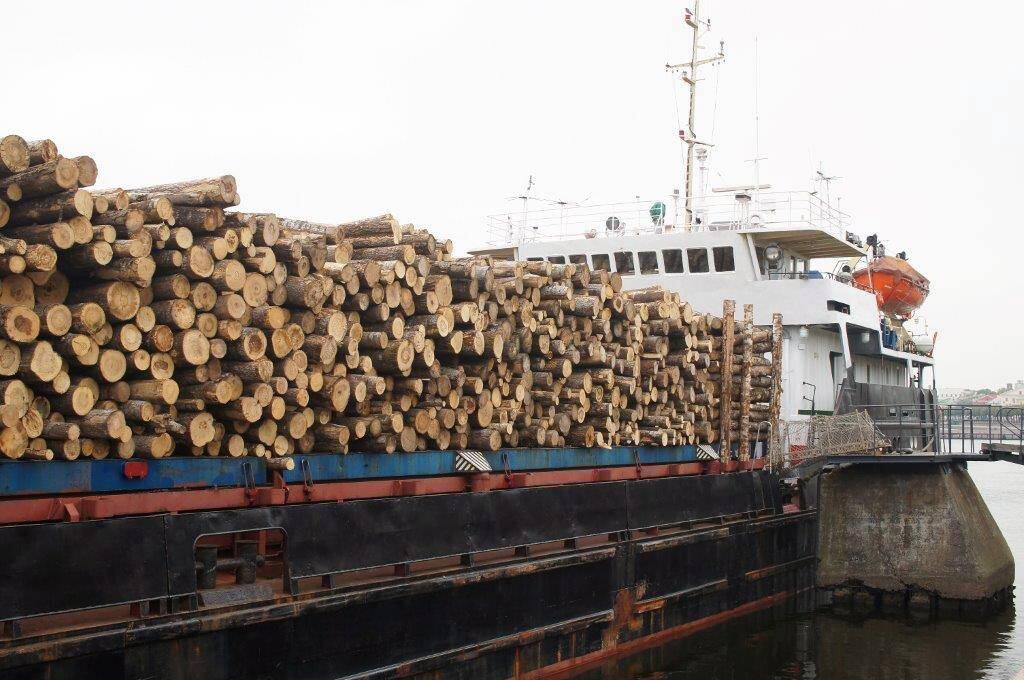 Næringen frykter oppsigelser dersom de ikke får eksportert det de produserer av tømmer: Illustrasjonsfoto: Colourbox