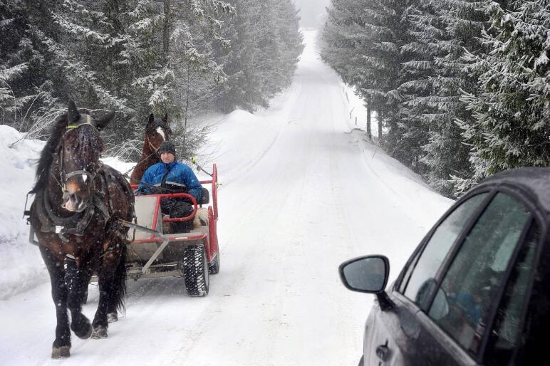 Erfaren kusk: Arnt-Sverre Røren bruker veiene rundt gården i Modum til å trene sine kaldblodstravere, og har vært utsatt for mange stygge episoder av uansvarlige bilførere. Nylig var han nær ved å velte med vogna, da Vetle-Jon ble skremt av en traktor som kom i høy fart, og med lasteren rett til værs.