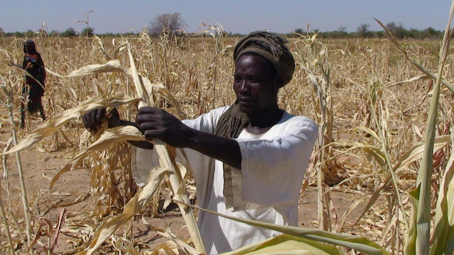 Avlingssvikt: Tørke, som hos Goutrane Saleh i Tsjad, presser matlagre og destabiliserer markedet Norge er avhengig av. Foto: Irina Fuhrmann/Oxfam.