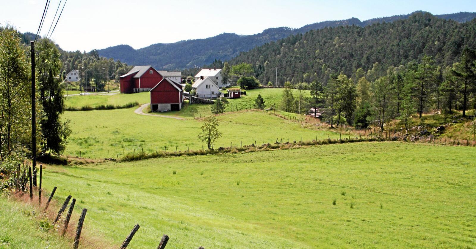 Årets jordbruksavtale føyer seg i rekken av avtaler som ikke prioriterer grasbaserte produksjoner i distriktene, selv om det er disse vi har best naturgitte forhold for å drive med, skriver styremedlemmer i Møre og Romsdal Bondelag. Foto: Bjarne Bekkeheien Aase