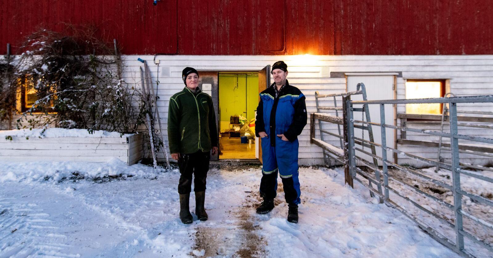 Torill Nevland Fallet og Frode Fallet hadde ledig plass i fjøset etter avvikling av mjølkeproduksjon. No har dei tatt imot dyr frå evakuerte gardar. Foto: Vidar Sandnes