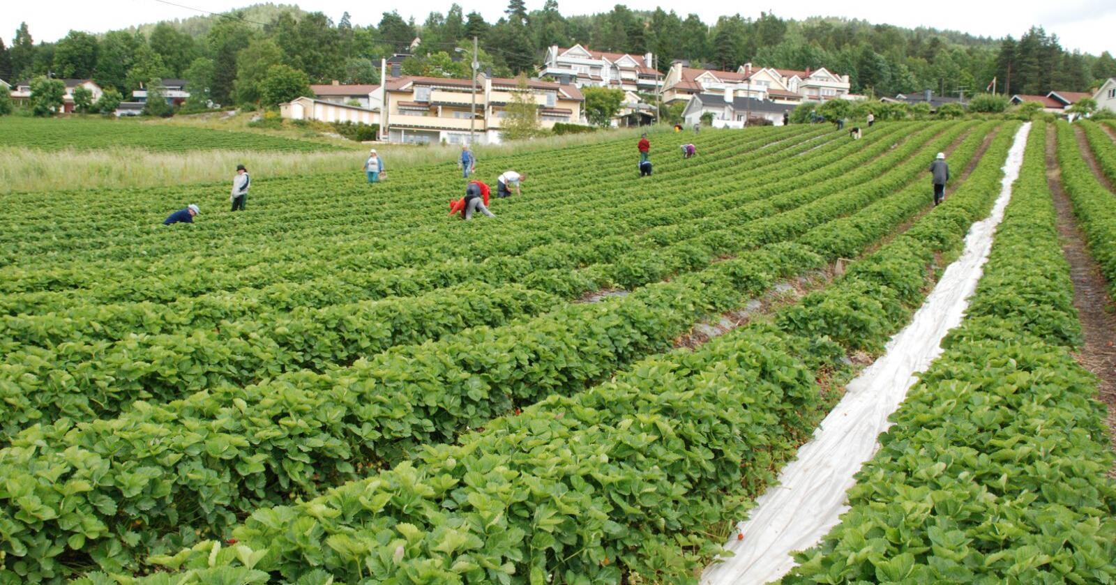Siden fredag sist uke, er i alt 174 arbeidere blitt smittet på én og samme landbrukseiendom i den lille byen Mamming. Bildet er tatt i Norge. Illustrasjonsfoto: Ellen Munden Paalgard
