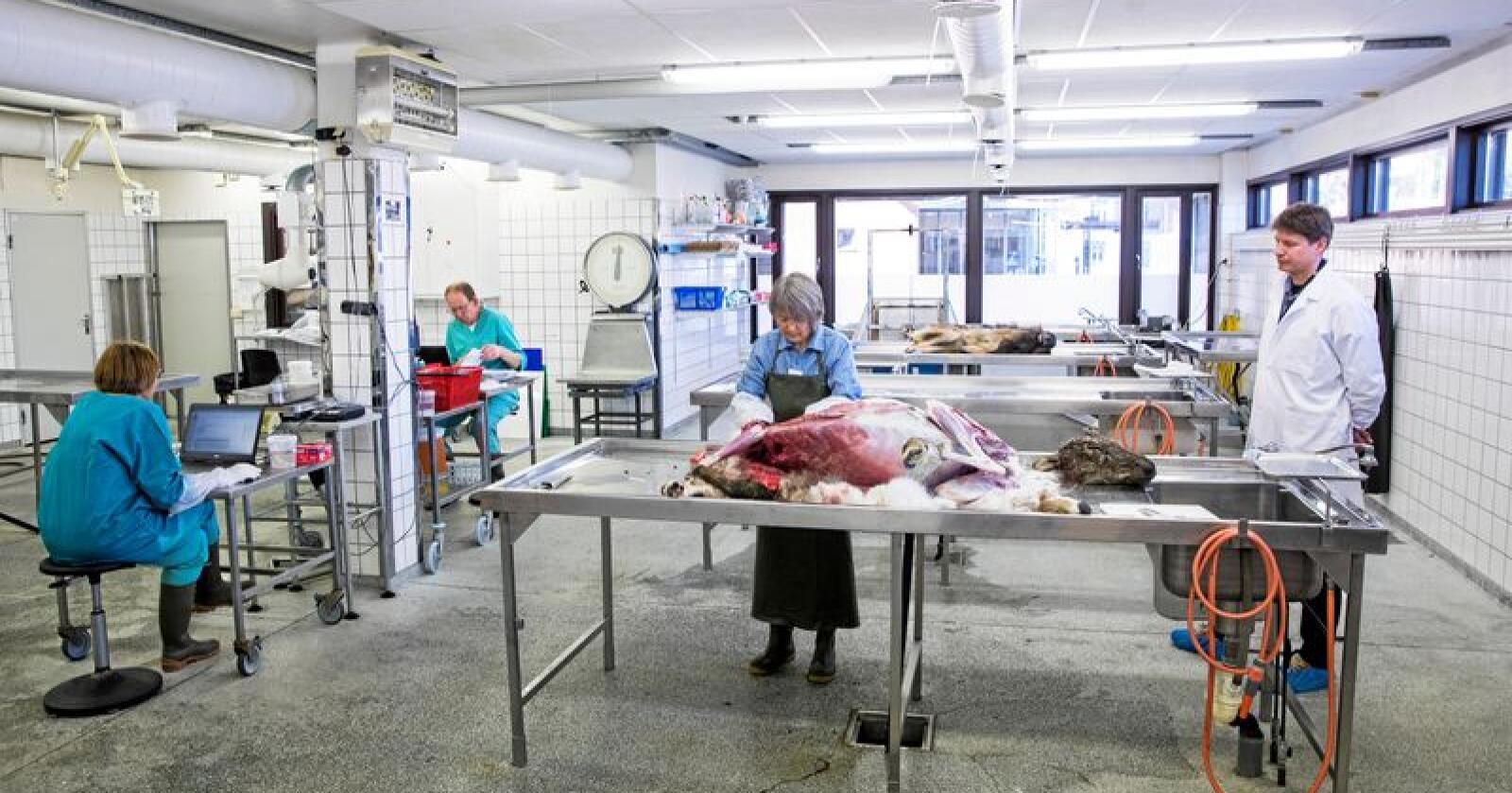 Oslo: Alt skal obduseres i Oslo, om Veterinærinstituttets spareforslag blir stående. Foto: Tore Meek/NTB scanpix