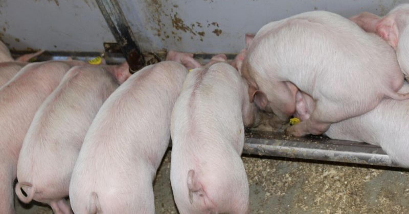 Ring ditt lokale Mattilsyn om du opplever akutt fôrmangel. Arkivfoto: Øystein Heggdal