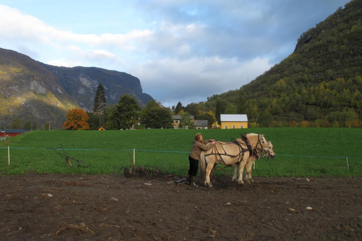 Sogn jord- og hagebruksskule, som er den einaste fulløkologiske skulen i landet, brukar mykje hest i undervisninga. Her lærar Hannah Wood med to av hestane. (Foto: Spira Svendsen).