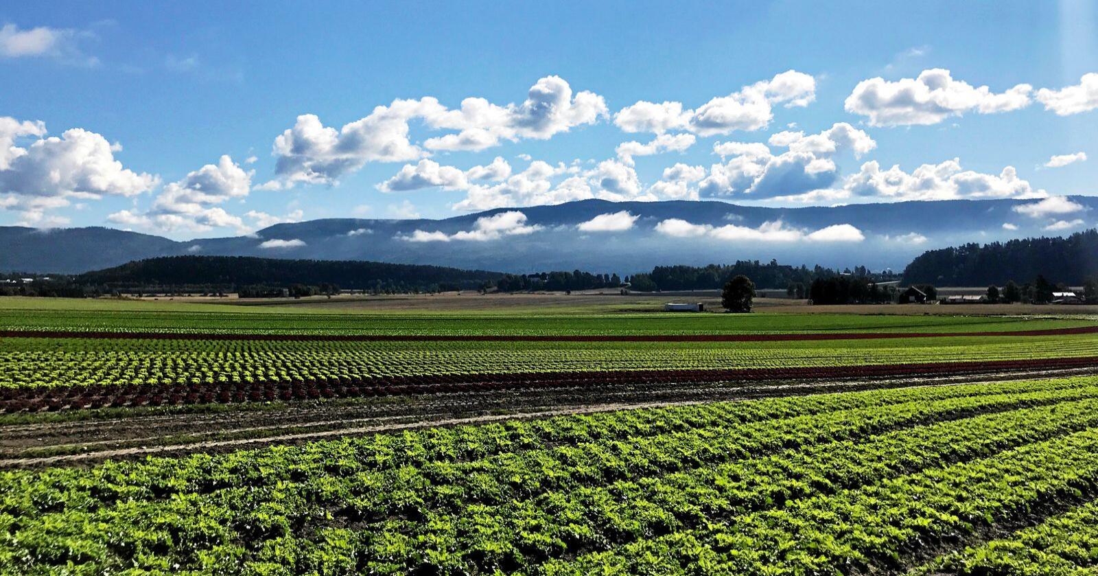Grønnsaker. Vi jobber for å øke vår produksjon av frukt og grønt, skriver Kristina Hegge. Foto: Lars Bilit Hagen