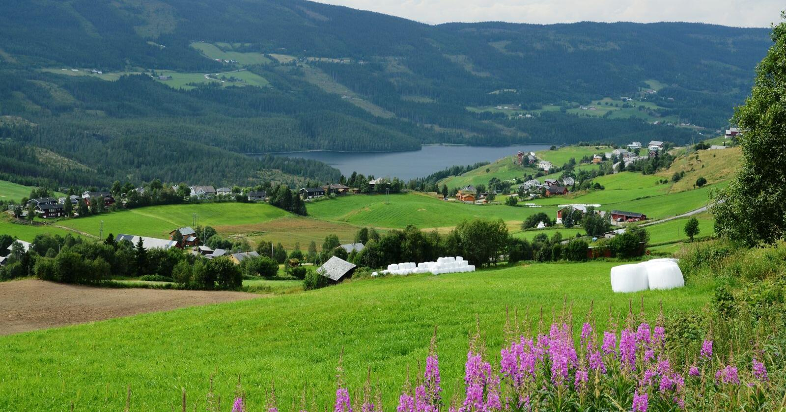 Et gårdsbruk er både en arbeidsplass og en bolig. Det er en investering i trivsel og trygghet, skriver Øyvind H. Ekeberg. Bildet er fra Valdres. (Arkivfoto)