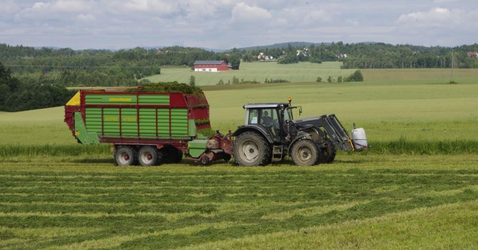 Bakvendt: Grasarealet synker i de rene grasområdene i tilskuddssonene 5-7, på Vestlandet og i Nord-Norge, mens grasarealet øker i sone 1 og 3, som i stor grad er områder egnet for korndyrking. Foto: Harald Lie
