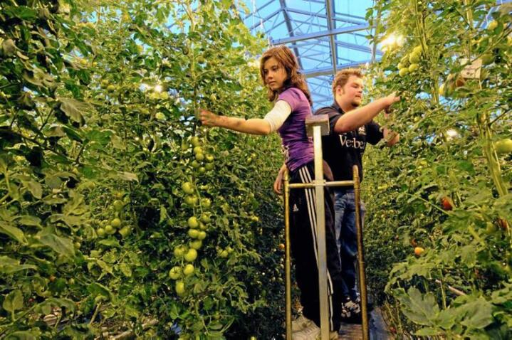Stor vekst: Ifølge tall fra Utdanningsdirektoratet har til sammen 5070 ungdommer søkt på utdanningsprogrammet naturbruk i 2019. Veksten fra i fjor er på rundt fem prosent. Her fra undervisning med dyrking i drivhus. Foto: Naturbruksskolene