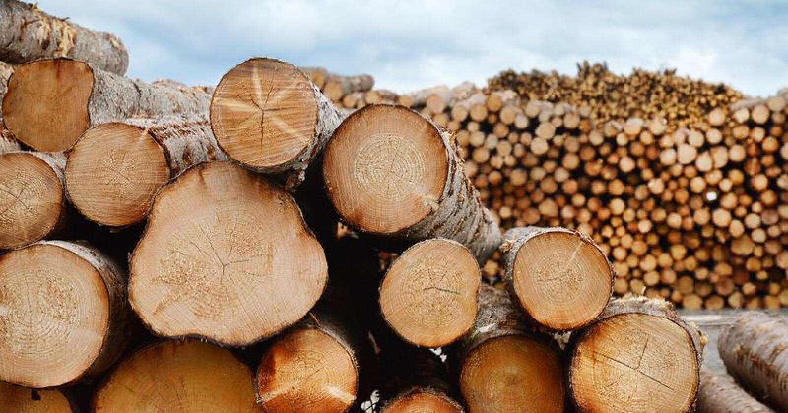 Prisene på tømmer fortsetter å øke også i første kvartal i 2019. Foto: Siri Juell Rasmussen