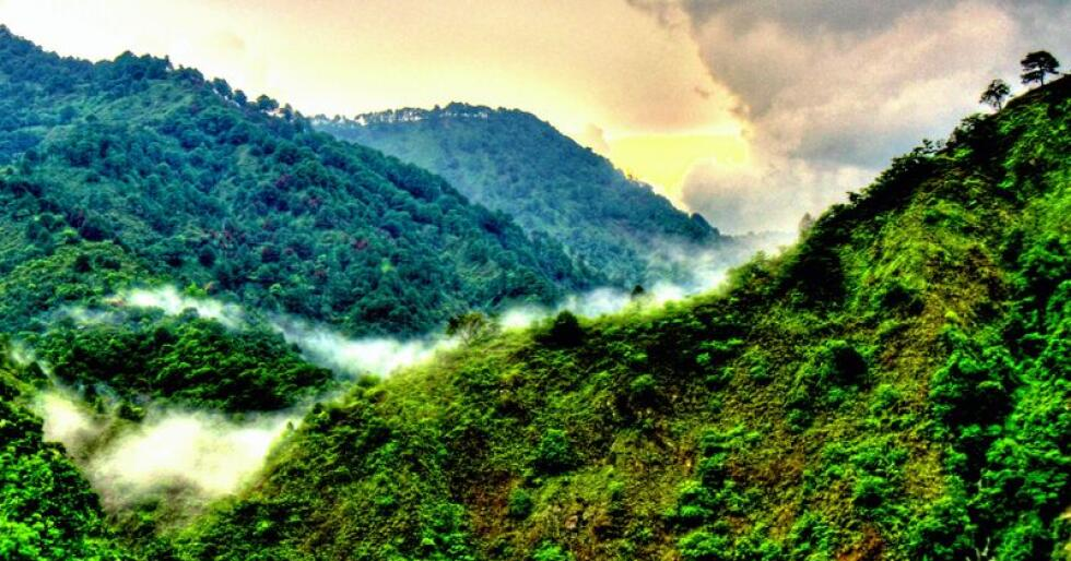 Det er allerede mye skog på Filippinene. Landet hadde tidlgiere Guinnes-rekorden i treplanting. Foto: herbalthought