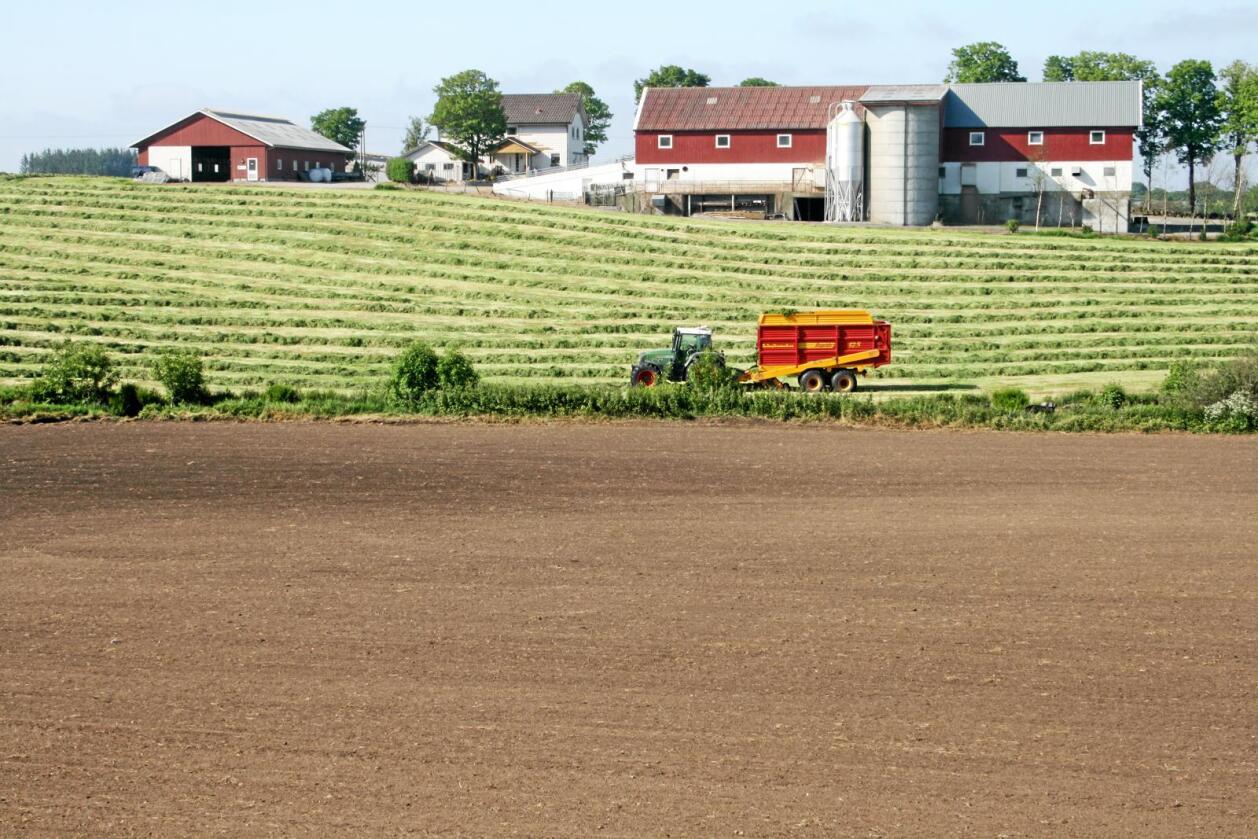 Bondeinntekt: Summen av marknadsanslag og faktorar styrt av jordbruksoppgjeret kan gi snittbonden 8000 kroner inntektsvekst. Foto: Bjarne Bekkeheien Aase